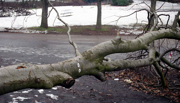 A fallen tree on the road is an example of a pattern interrupt.